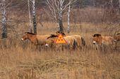 В Чернобыльской зоне создадут заповедник