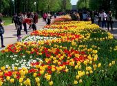 В дендропарке Кировограда – пик цветения тюльпанов – не пропустите!