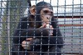 В Днипре закроют единственный зоопарк