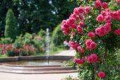 У Київському ботсаду створять квітник для незрячих