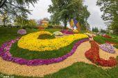 В Киеве создали 3D-композицию из хризантем