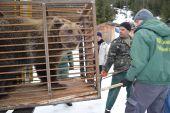 В реабилитационном центре нацпарка «Синевир» поселилась медведица из Днепра