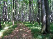 Галицкий национальный парк станет больше