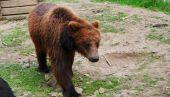 Открываются экскурсии в медвежий приют «Домажир»