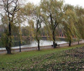 Парк «Отрадный», Киев