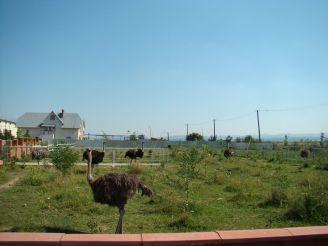 Страусиная ферма «Билаки»