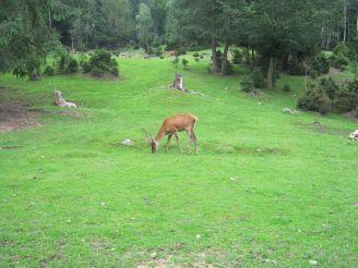 Mini-zoo, Yaremche