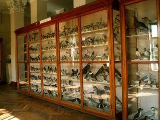 Зоологічний музей, Одеса
