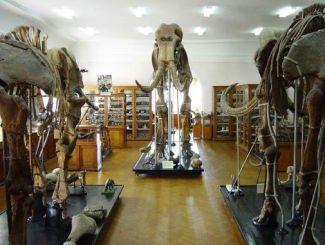 Палеонтологический музей, Одесса